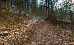 Paesaggio della foresta autunnale recente con prima neve Immagine Stock