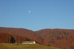 Paesaggio della foresta in autunno Immagine Stock