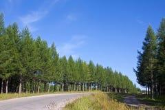 Paesaggio della foresta in Cina del nord Fotografia Stock Libera da Diritti