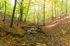Paesaggio della foresta con il piccolo ponte di legno sopra la corrente asciugata fotografie stock