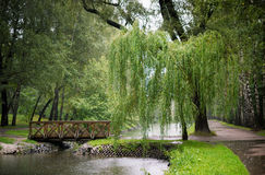 Paesaggio della foresta con un salice Fotografie Stock