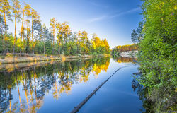 Paesaggio della foresta del fiume della primavera Immagini Stock Libere da Diritti