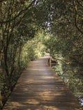 Paesaggio della foresta della mangrovia in Bali, Indonesia Fotografia Stock