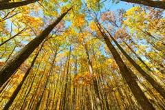 Paesaggio della foresta di autunno Immagini Stock