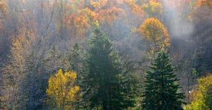 paesaggio della foresta di autunno Fotografia Stock Libera da Diritti