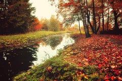 Paesaggio della foresta di autunno - alberi vicino al fiume in tempo nebbioso Fotografia Stock