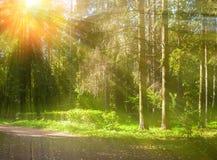 Paesaggio della foresta di autunno con gli alberi nella foresta in tempo soleggiato di autunno Immagini Stock