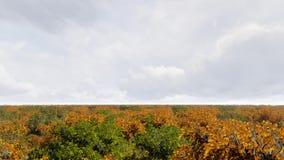 Paesaggio della foresta di autunno di vista aerea video d archivio