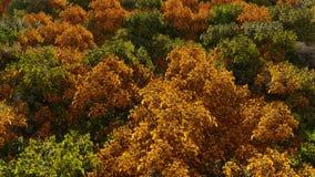 Paesaggio della foresta di autunno di vista aerea archivi video
