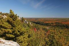 Paesaggio della foresta di caduta Fotografie Stock Libere da Diritti