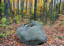 Paesaggio della foresta di caduta Fotografia Stock