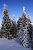 Paesaggio della foresta di inverno Immagini Stock Libere da Diritti