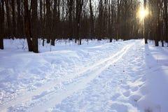 Paesaggio della foresta di inverno Fotografie Stock