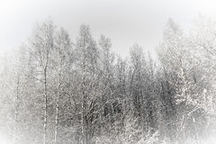 Paesaggio della foresta di inverno Fotografie Stock Libere da Diritti
