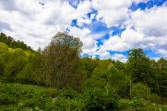Paesaggio della foresta della montagna Fotografie Stock