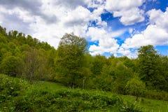 Paesaggio della foresta della montagna Immagine Stock