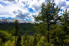 Paesaggio della foresta della montagna Immagini Stock