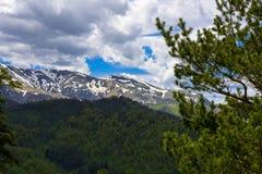 Paesaggio della foresta della montagna Fotografia Stock