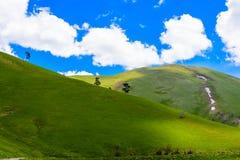 Paesaggio della foresta della montagna Immagini Stock Libere da Diritti