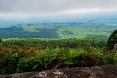 Paesaggio della foresta della montagna di Forest Green Paesaggio fantastico della foresta della foresta della montagna nebbiosa fotografia stock