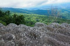Paesaggio della foresta della montagna di Forest Green Paesaggio fantastico della foresta della foresta della montagna nebbiosa immagini stock libere da diritti