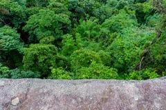 Paesaggio della foresta della montagna di Forest Green Paesaggio fantastico della foresta della foresta della montagna nebbiosa immagine stock