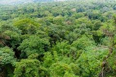 Paesaggio della foresta della montagna di Forest Green Paesaggio fantastico della foresta della foresta della montagna nebbiosa immagini stock