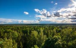 Paesaggio della foresta, Mountain View Immagini Stock