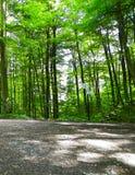 Paesaggio della foresta, natura polacca fotografia stock