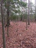 Paesaggio della foresta negli Stati Uniti orientali Fotografia Stock Libera da Diritti