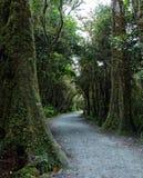 Paesaggio della foresta pluviale della Nuova Zelanda Fotografia Stock Libera da Diritti