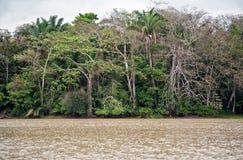 Paesaggio della foresta pluviale nel Panama Immagini Stock