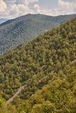 Paesaggio della foresta della quercia in Asturie Parco naturale di Muniellos fotografia stock