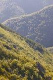 Paesaggio della foresta della quercia in Asturie Punto di vista di Muniellos immagini stock libere da diritti