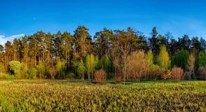 Paesaggio della foresta sotto il cielo di sera con le nuvole al sole Fotografia Stock Libera da Diritti