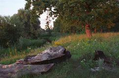 Paesaggio della foresta sul tramonto immagini stock