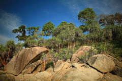 Paesaggio della giungla Fotografia Stock