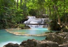 Paesaggio della giungla Fotografie Stock Libere da Diritti