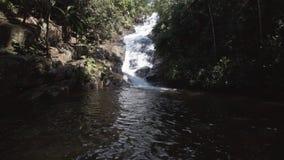 Paesaggio della giungla con la cascata stock footage