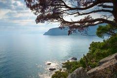 Paesaggio della laguna del mare calmo con l'alta banca ed il mare soleggiato di riflessione e sporgersi dalla cima degli alberi Fotografia Stock Libera da Diritti