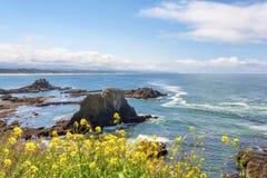 paesaggio della linea costiera dell'Oregon dello Copia-spazio Immagini Stock