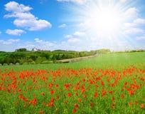 paesaggio della molla con il campo del papavero Immagini Stock Libere da Diritti
