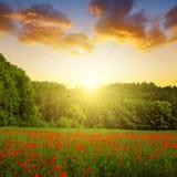paesaggio della molla con il campo del papavero Fotografia Stock Libera da Diritti