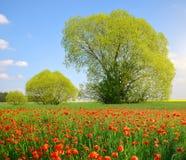 paesaggio della molla con il campo del papavero Immagine Stock Libera da Diritti