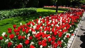 Paesaggio della molla di stordimento, giardino famoso di Keukenhof con i tulipani freschi variopinti, immagine stock libera da diritti