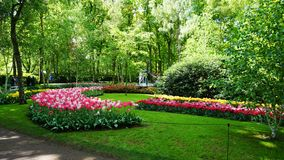 Paesaggio della molla di stordimento, giardino famoso di Keukenhof con i tulipani freschi variopinti, fotografia stock libera da diritti