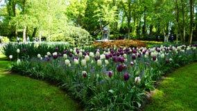 Paesaggio della molla di stordimento, giardino famoso di Keukenhof con i tulipani freschi variopinti, immagini stock libere da diritti