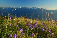 Paesaggio della montagna Immagini Stock