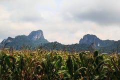 Paesaggio della montagna. Fotografia Stock Libera da Diritti