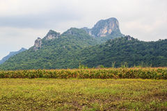 Paesaggio della montagna. Fotografie Stock